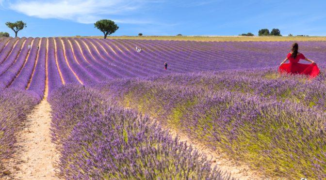 La Provença i la lavanda